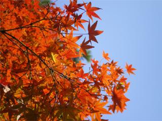 【9〜11月】秋の味覚と田舎道探検
