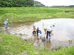 田んぼビオトープと水路探検